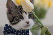 Canberra Cat fix